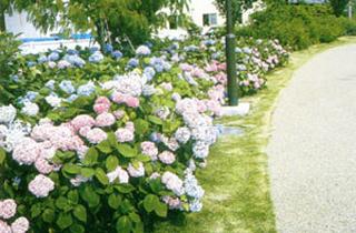 kasei-park_facilities_04_22